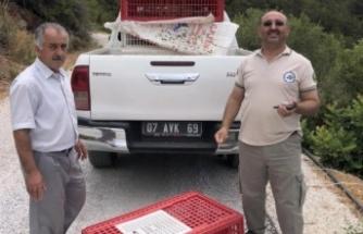 Alanya'da keklikler Aliefendi'den doğaya bırakıldı