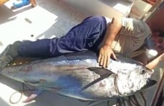 Balıkçının oltasına 130 kiloluk orkinos takıldı