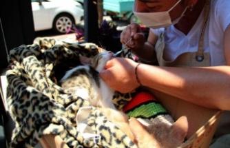 Çöp kovasından ölümden kurtardıkları yavru kedilerle bebek gibi ilgileniyorlar
