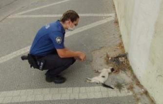 Kadın polis, bir aracın çarpıp kaçtığı yavru kedinin başından dakikalarca ayrılamadı