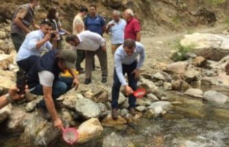 Alara Çayı'na 4 bin adet kırmızı benekli alabalık bırakıldı