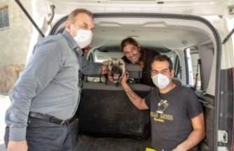Aracın çarptığı sokak köpeğine belediye şefkati