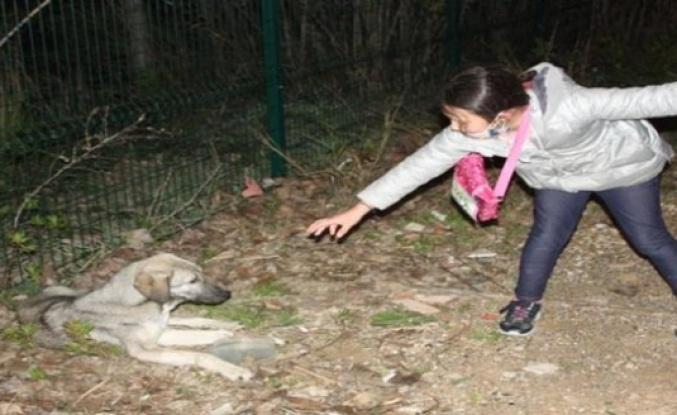 """Küçük kızın hasta köpeğin başındaki """"ne olur ölmesin"""" diye ağlayışları yürekleri burktu"""