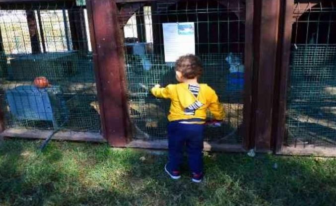 Anka Kuşları projesinde çocuklar son kez bir arada