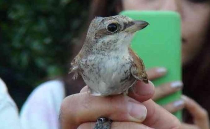Üniversiteli gençler, doğada kuşların yaşamını öğrenmek için bir araya geldi