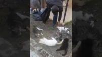 İşte kedi katliamının görüntüleri